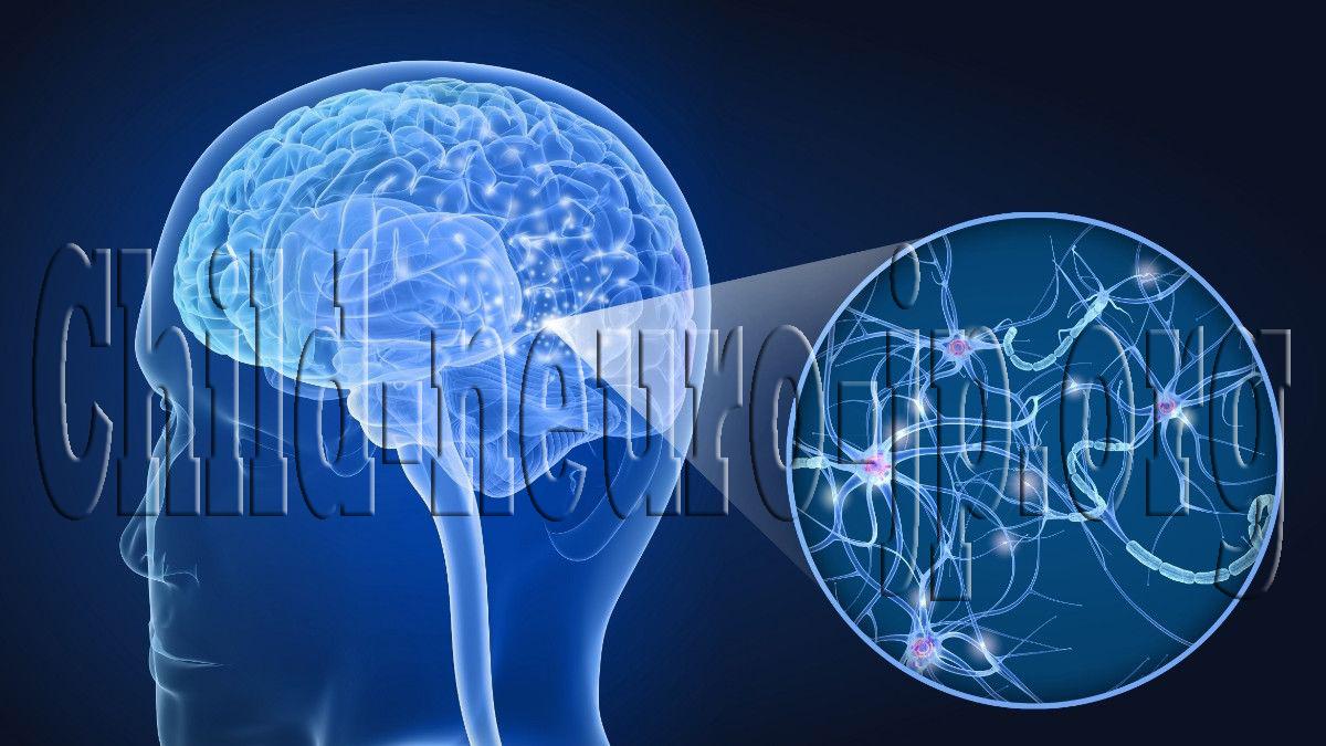 Perkembangan Otak dan Peran Pengalaman Di Usia Dini