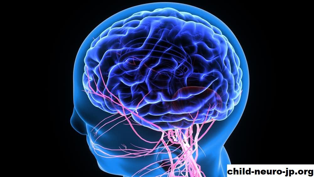 Mengenal Penyakit Saraf Otak Dan Juga Neurologi Otak Saraf Anak