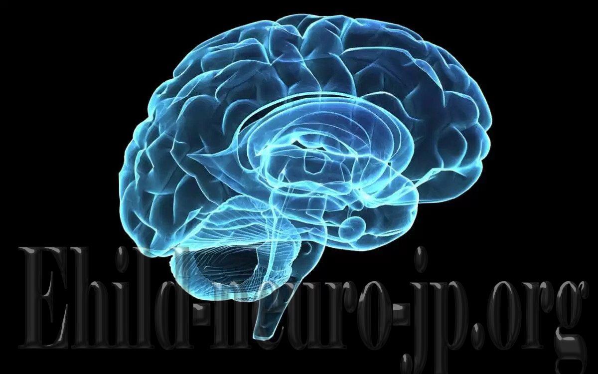 Efek Lingkungan Pada Struktur Dan Fungsi Saraf Otak Anak