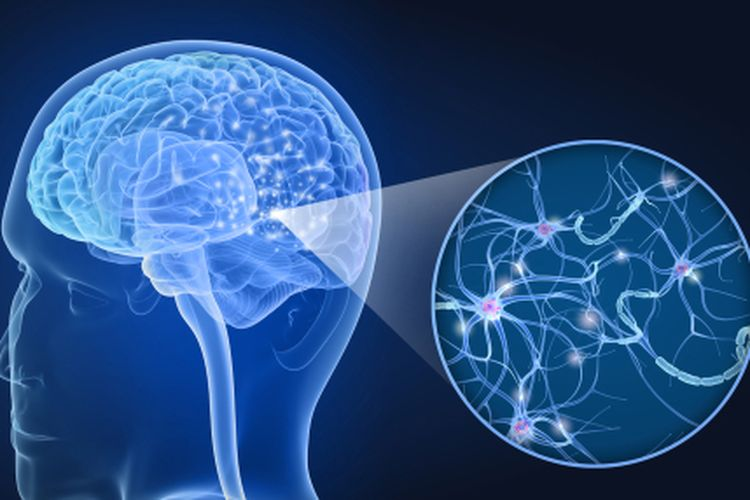 Mengenal Komunitas Kesehatan Jepang Neurologi Otak Saraf Anak