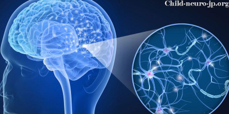 Mengetahui Tentang Sistem Saraf Otak Bekerja